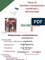 cambios cromosomicos