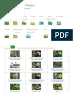 Identificación de Plantas