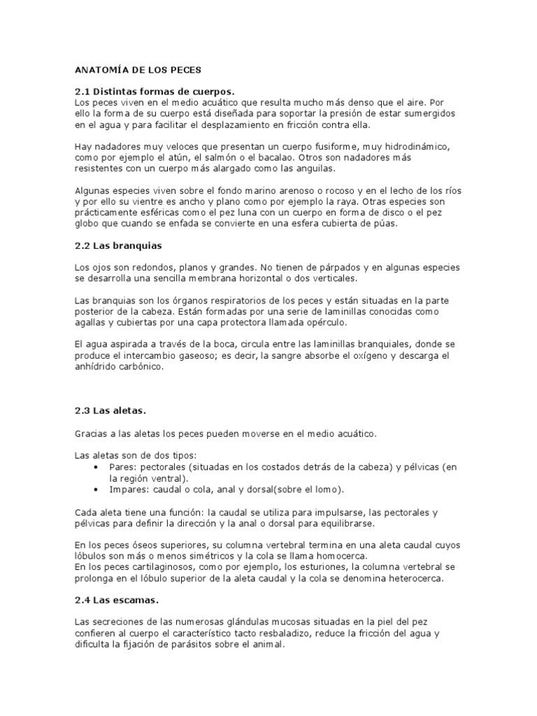 Perfecto Hoja AnalogÃa Celular Friso - hoja de cálculo - msklerose.info