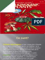 Plante halucinogene