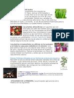 Uso de Plantas Medicinales y Mas