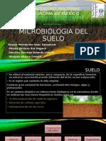 Microorganismos del suelo