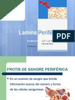 Lamina Periferica Practica