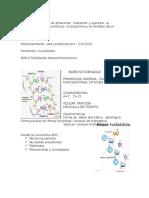 clase particular de genetica mecanismo de trasduccion .docx