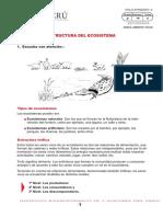 ESTRUCTURA DEL ECOSST.pdf