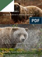 grizzly bear presentation