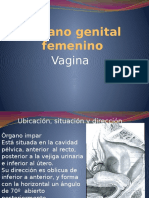 Órgano Genital Femenino