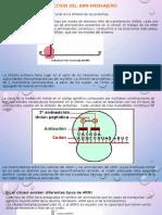 Presentacion Biologia Mol.1