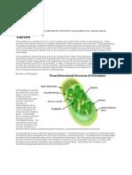Chloroplast Isolation
