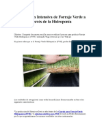 Producción Intensiva de Forraje Verde a Través de La Hidroponía