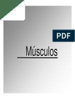 Apuntes PDF Musculos 2017