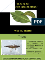 Tripes No Ficus
