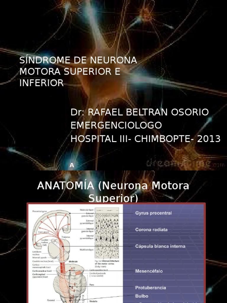 segunda neurona