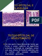 TECIDO EPITELIAL E GLANDULAR 2013.2.pdf