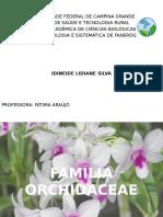 Orchidaceae Aracaceae