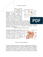 Sistema Endocrino, Reproductor Masculino, Reproductor Femenino, Embarazo