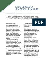 OBSERVACIÓN DE CELULA VEGETAL EN CEBOLLA (ALLIUM CEPA)