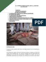 ALGORITMOS DE LA PERICIA MEDICOLEGAL EN EL LUGAR DE LOS HECHOS.doc