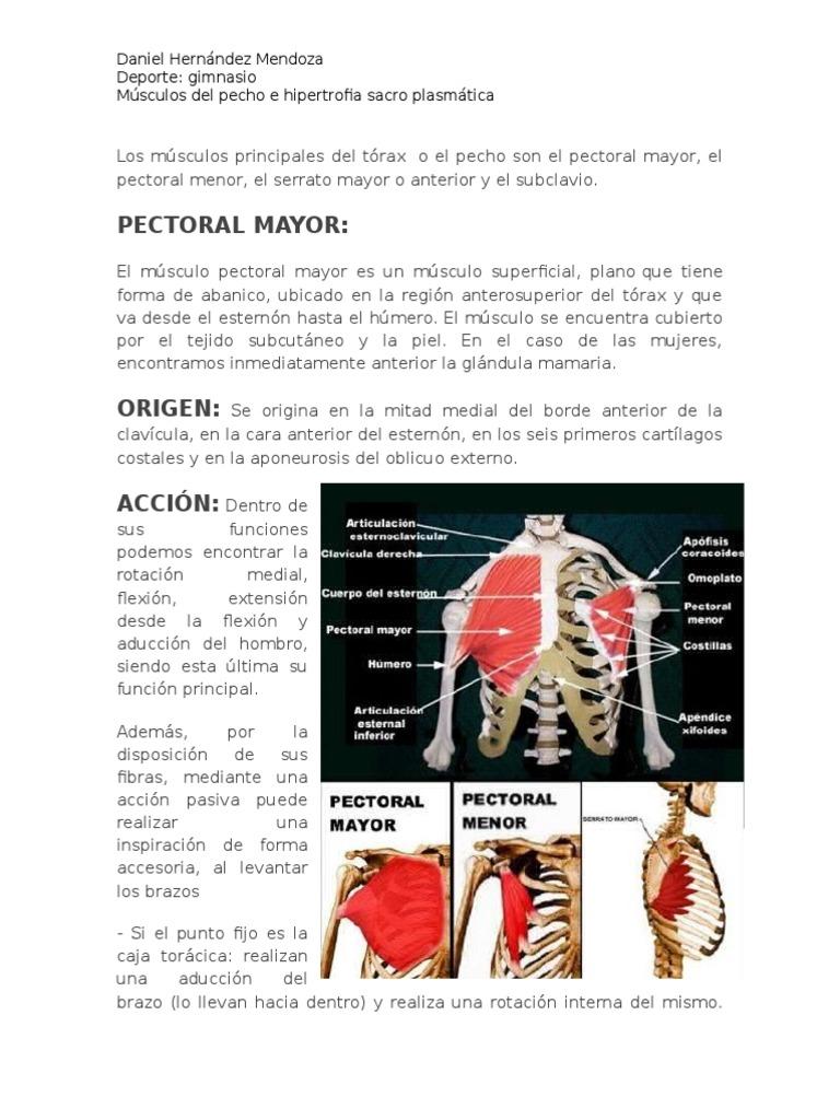 Asombroso Diagrama De Los Músculos Del Pecho Composición - Anatomía ...