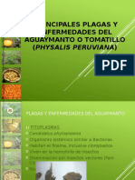 Principales Plagas y Enfermedades AGRO RURAL