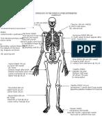 ossification of upper & lower limb.docx
