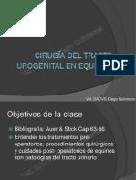 Cirugía Del Tracto Urogenital en Equinos Web 2013