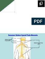 Kuliah Anatomi-Fisiologi Sistem Saraf.ppt