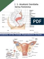Prasyarat 1- Anatomi Genitalia Interna Feminina