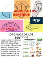 Organos de Los Sentidos-examen.sabado Imprimir...