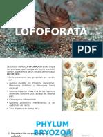 LOFOFORATA