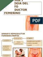 Anatomia & Fisiologia Del Aparato Reproductor