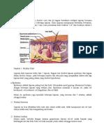 Anatomi Fisologi Kulit