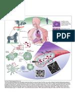 04712a06f324 Model Patogeneze Ebola Virusa