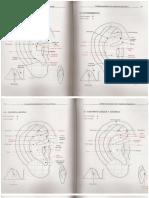 316293139-La-Auriculoterapia-en-Esquemas-2.pdf