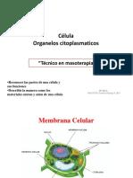 organelos-citoplasmaticos.pdf