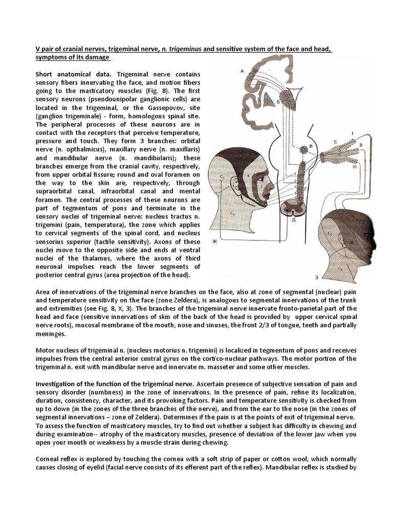 V, VII Pair of Cranial Nerves | Vertigo | Vestibular System