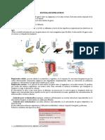 Sistema Respiratorio en Invertebrados