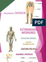 Tema 5 Huesos Cintura Pélvica y MMII