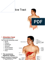 Lecture 22 - The Digestive Tract