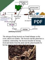 Nitrogen Cycle 2