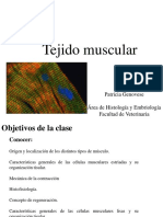 Teorico Muscular 2015