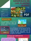 Propiedades Generales de Las Plantas Verdes