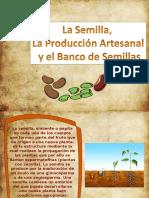 Semilla_definitiva