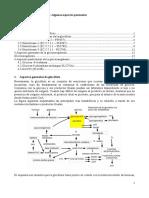 Glucidos Hexokinasa Glucokinasa Glucosa Fosfatasa (1)