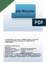 04 - Muscular FSL