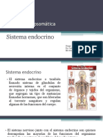 Sistema Endocrino - Expo Final