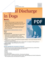 Vaginal Discharge in Dogs