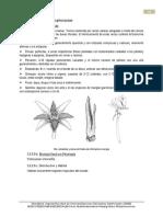 9-Rhizophoraceae