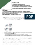 EMBRIOLOGÍA DEL SISTEMA MUSCULAR5.docx