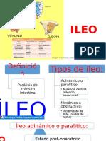 ILEO EXPO